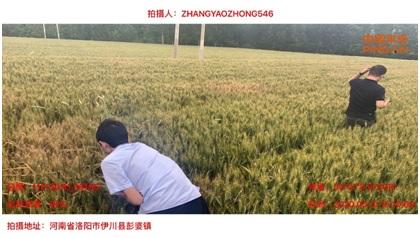 20200604平安产险洛阳服务三农-2.jpg