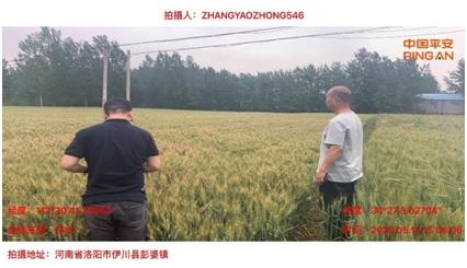 20200604平安产险洛阳服务三农-1.jpg